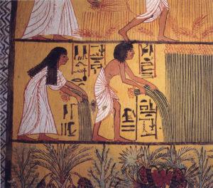 Egyptian harvest 300x264 - علامات الحمل في ذكر  وهل تشهين تلك الأطعمه ؟