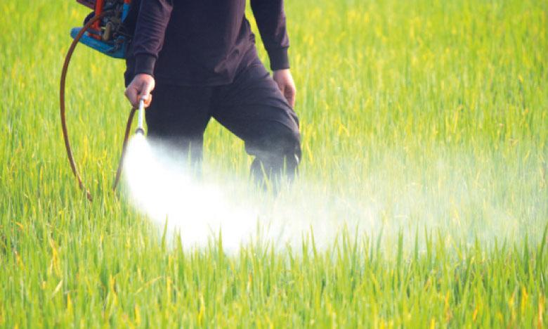 مبيدات طبيعية 100٪ لضمان جودة المنتجات العضوية - تحضير مبيدات طبيعية 100٪ لضمان جودة المنتجات العضوية