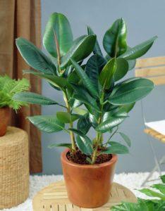 النباتات التي تقوم بتصفية الهواء الذي يجب أن يكون لديك في منزلك 2 234x300 - قائمة النباتات التي تقوم بتصفية الهواء الذي يجب أن يكون لديك في منزلك