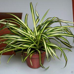 النباتات التي تقوم بتصفية الهواء الذي يجب أن يكون لديك في منزلك 4 300x300 - قائمة النباتات التي تقوم بتصفية الهواء الذي يجب أن يكون لديك في منزلك