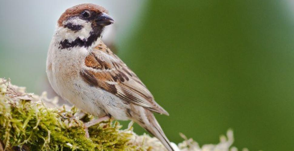 1072861 - Astuce efficase pour éloigner les oiseaux qui abîment le potager