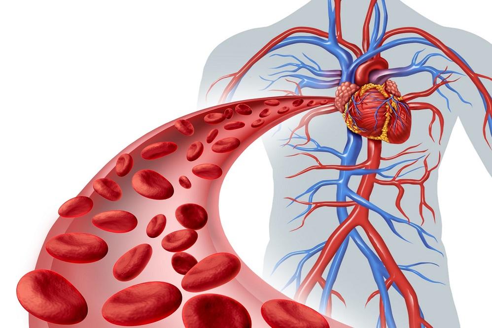 Comment améliorer naturellement votre circulation sanguine - Vous cherchez à améliorer votre circulation sanguine, voici comment y remédier