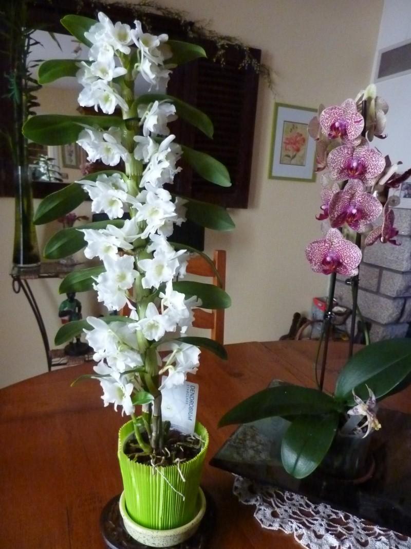 Faire refleurir une orchidée que lon ma offerte en cadeau - كيفية جعل الأزهار و زهرة الأوركيد تنمو مره اخري