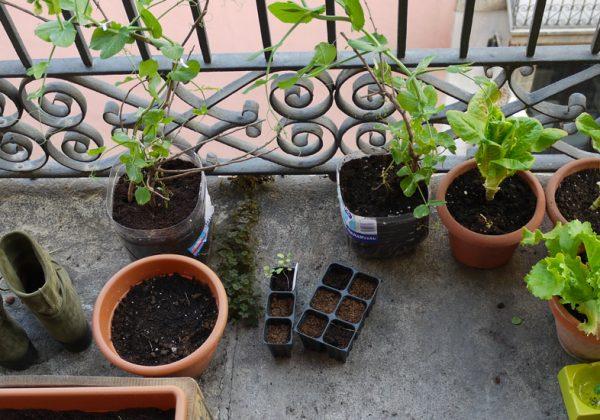 Plante medicinale balcon 600x420 1 - Quelques plantes qui affectent le flux d'énergie personnel