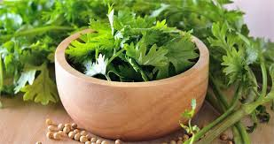 download 8 - Coriander an ally against heavy metals of the body