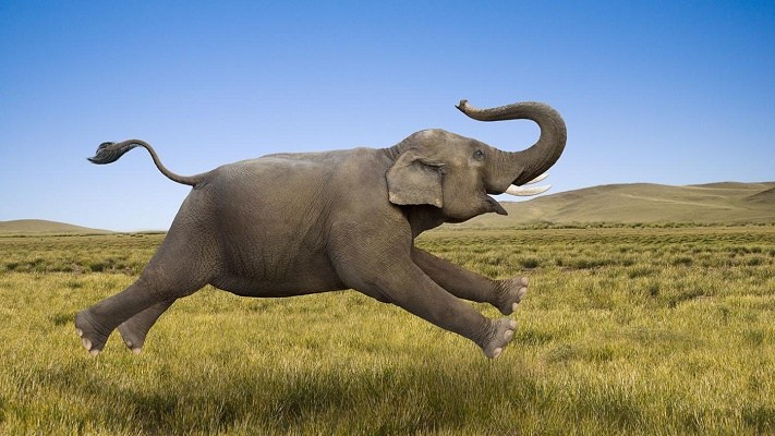 elephants - Amazing facts and little known about the parts for lady