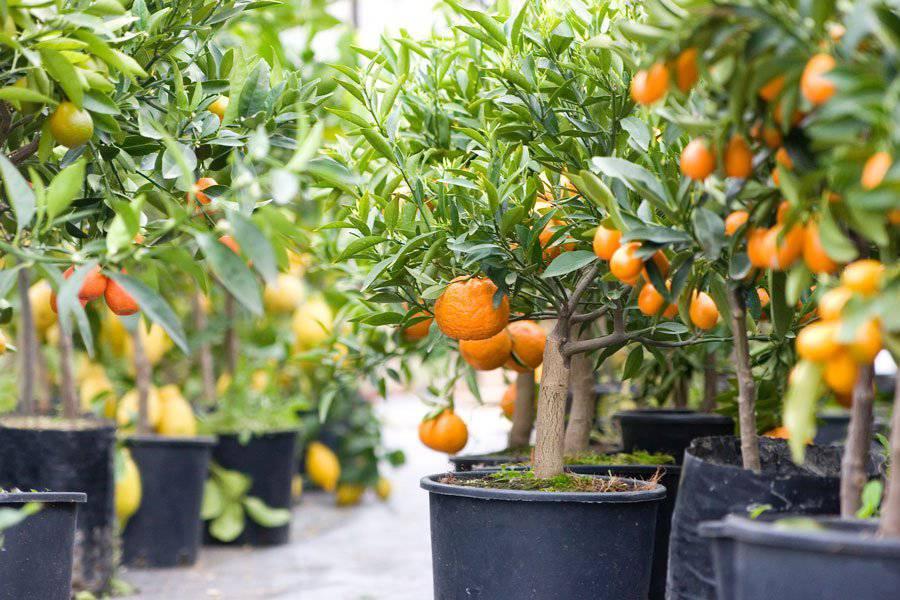 faire pousser à la maison - 8fruits that you can grow indoors