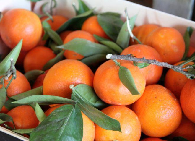 foto7 budet li plodonosit mandarin vyrashchennyy iz kostochki - Grow your own tangerines at home