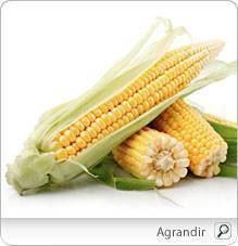 i52564 ma iuml s - Les divers avantages santé du maïs