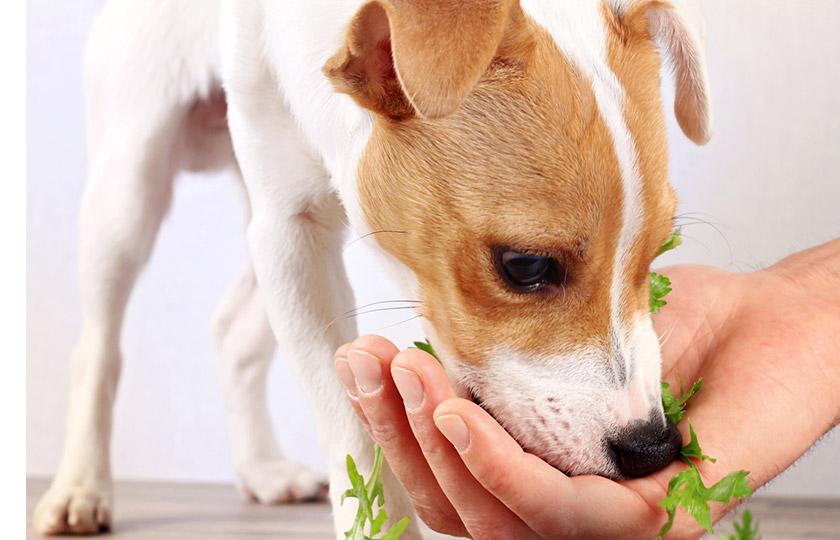 legumes pour chien alimentation - الأطعمة الصحية والأطعمة السامة للكلاب