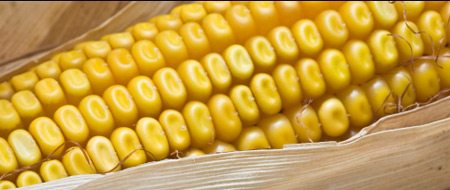 mais - ما لاتعرفه عن الفوائد الصحية المختلفة للذرة والفشار