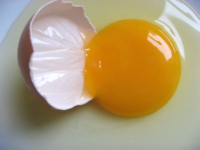 oeuf de poule pe  769 rime  769  115 jours 52 - Here is what white and viscous fiber means in the egg