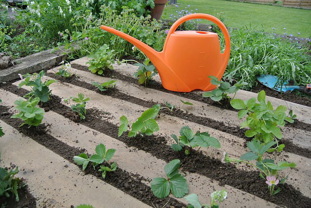 palettes fraisiers 143509 - Other uses of pallet boards in the vegetable garden