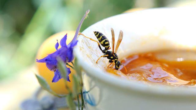 se debarasser des guepes vie pratique 5465150 - Practical tips for getting rid of a wasp nest