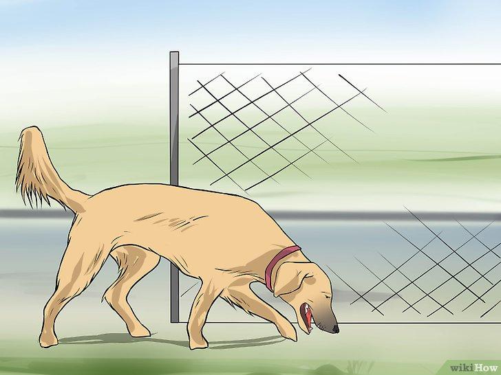 v4 728px Keep Dogs out of Flower Beds Step 1 Version 2 - Astuce pour empêcher le chien de détruire vos plantations