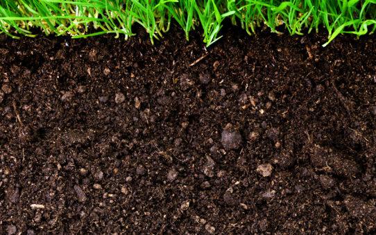 Différents types de sol pour mieux jardiner 542x340 - Différents types de sol pour mieux jardiner