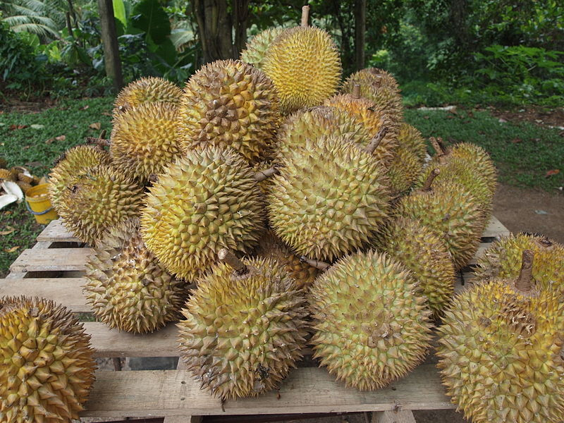 Tout savoir sur le durian le roi des fruits - All about durian king of fruits