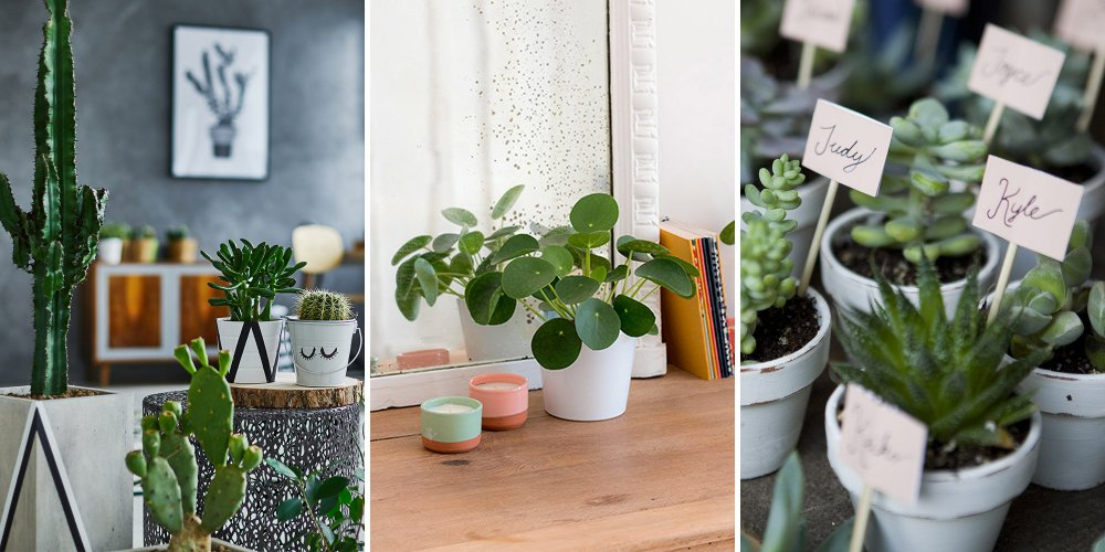 plantes interieur salon chambre - قائمه من النباتات الداخلية يجب تجنب من زرعتها بسبب سميتها
