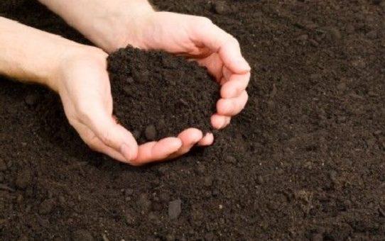 thumb le sol de jardin les secrets d une bonne terre 4540 542x340 - Different types of soil for better gardening