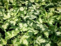 Liste des plantes qui filtrent l'air que vous devez avoir dans votre maison - Liste des plantes qui filtrent l'air que vous devez avoir dans votre maison