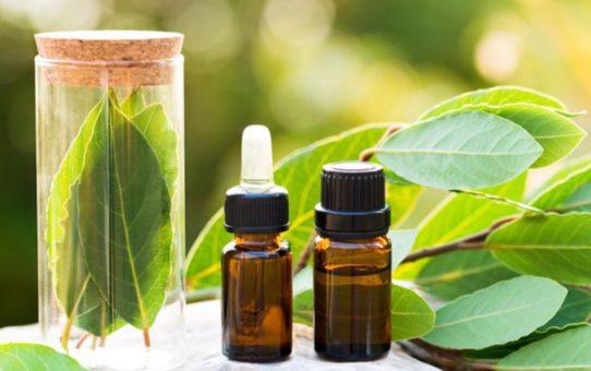 Voici comment faire votre propre huile de laurier naturelle 542x340 - Voici comment faire votre propre huile de laurier naturelle