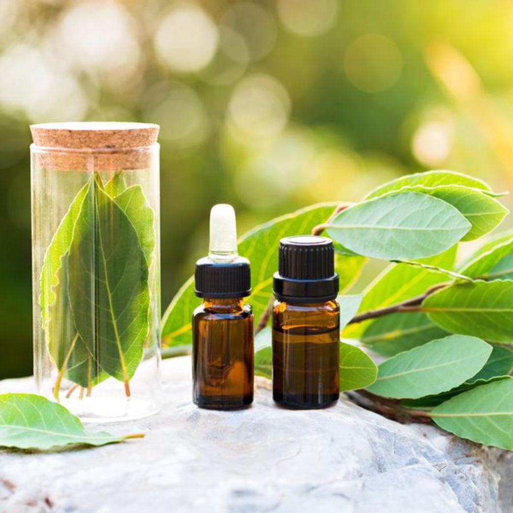 Voici comment faire votre propre huile de laurier naturelle - Voici comment faire votre propre huile de laurier naturelle