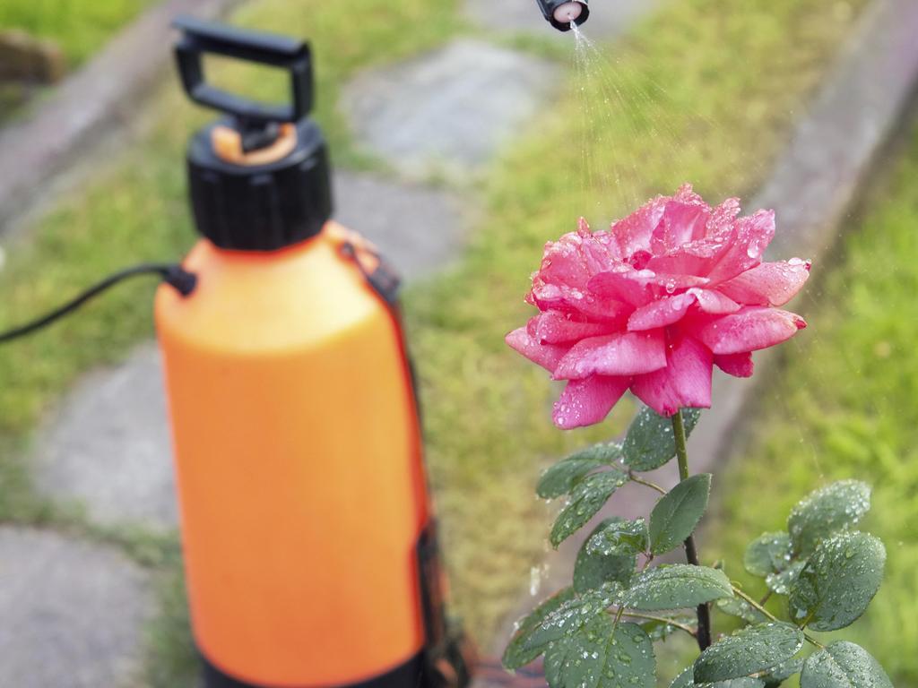 Astuces de préparation de pesticides 100 naturels pour des produits organiques - نصائح لتحضير مبيدات حشرية طبيعية 100٪ للمنتجات العضوية