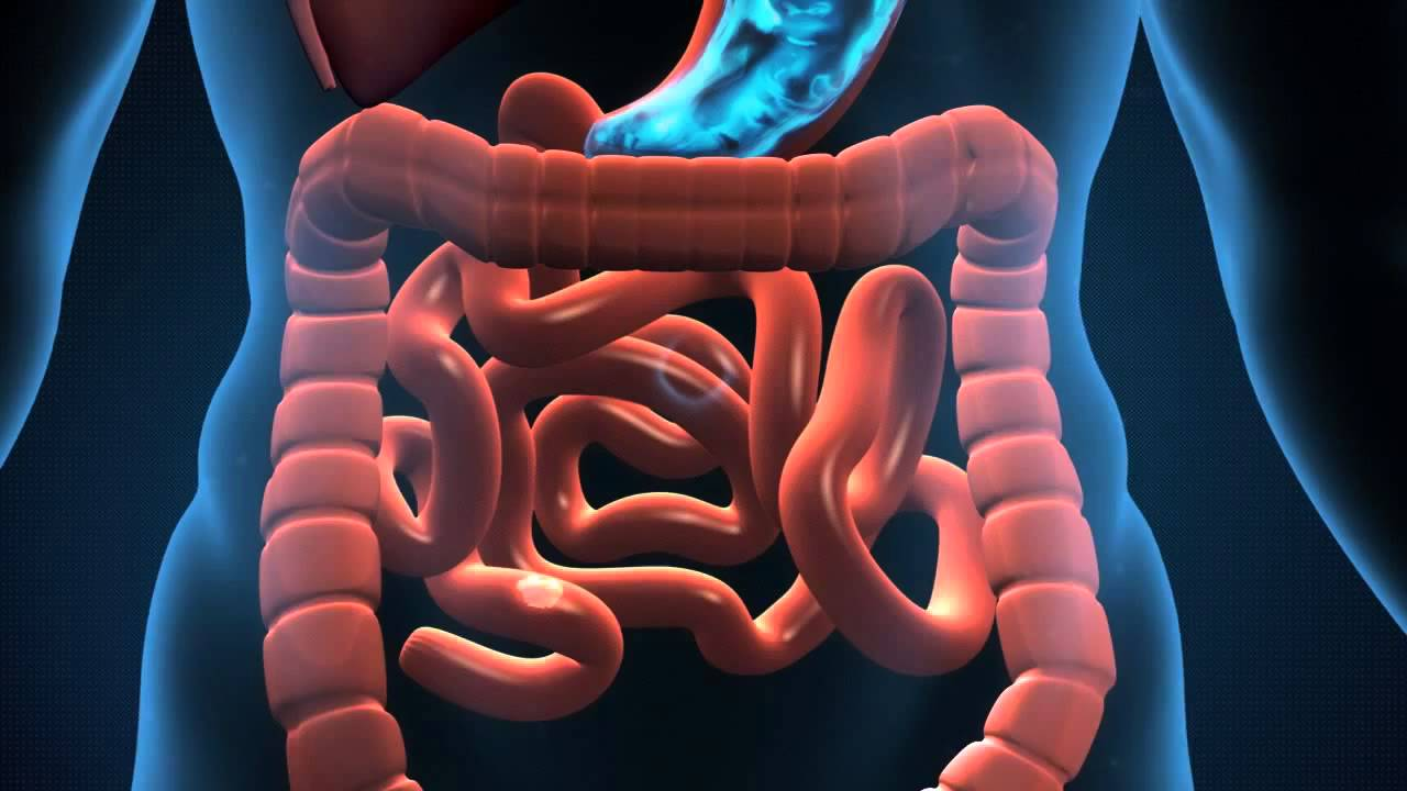 Remède naturel pour un nettoyage gastro intestinal - Remède naturel pour un nettoyage gastro-intestinal