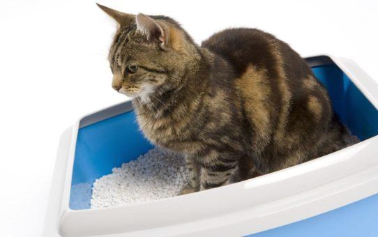 Astuce anti pipi de chat dans la maison 542x340 - Anti pee cat trick in the house