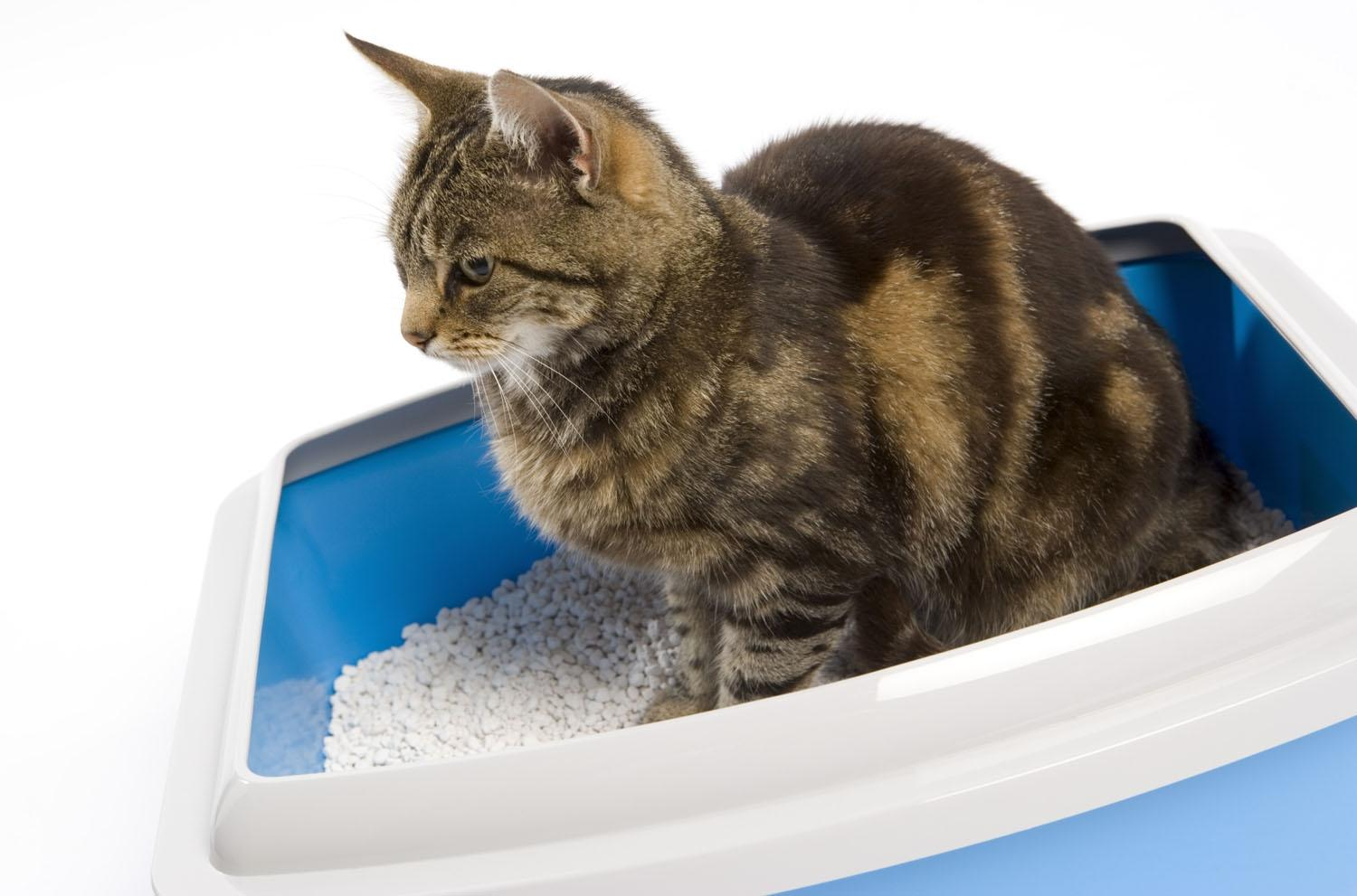 Astuce anti pipi de chat dans la maison - Anti pee cat trick in the house