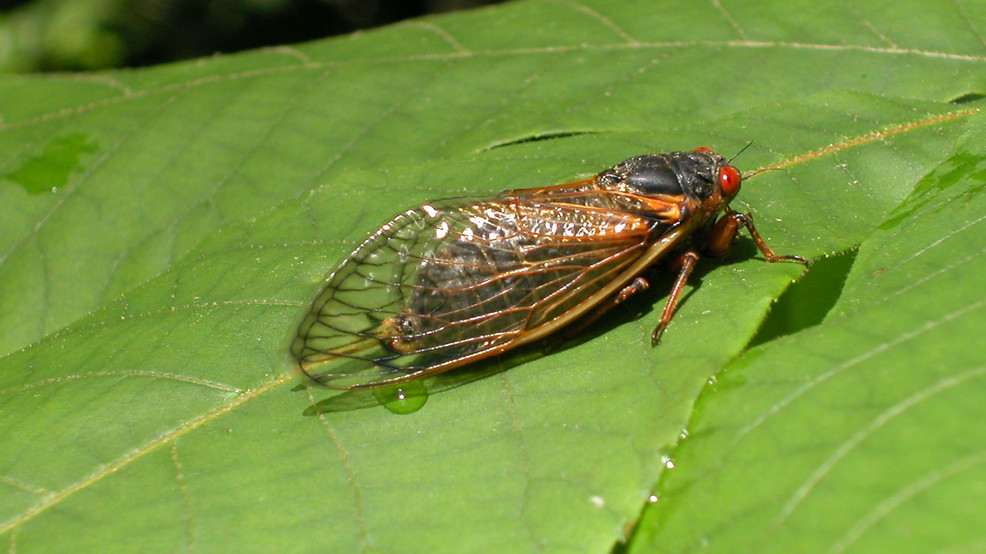 If You See This Bug Thats About to Invade the U.S. Dont Kill It - If You See This Bug That's About to Invade the U.S., Don't Kill It